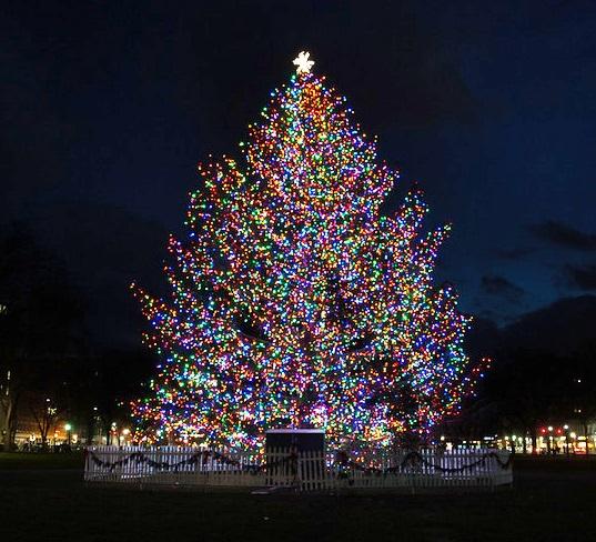 christmas-tree-lighting-photo-002